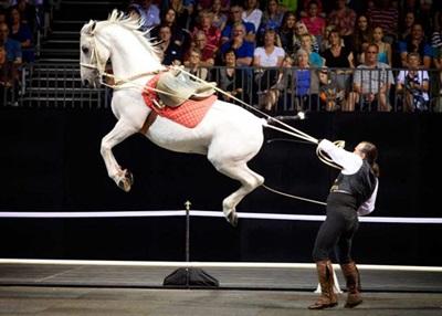Gala-of-Royal-Horses